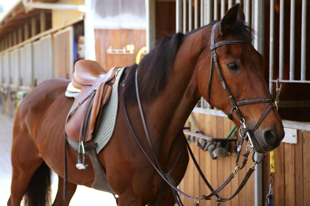 banner uw paard